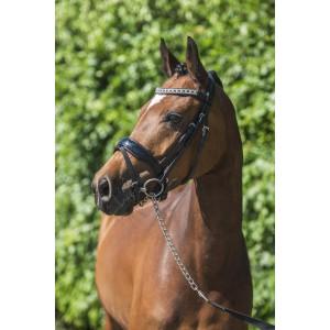 389P HB Showtime Hoofdstel Riverdale Pony