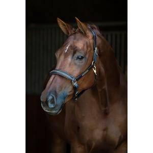 798 HB Show time lederen halster Horse name